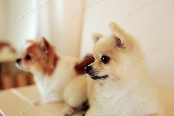 Dog in pet shop