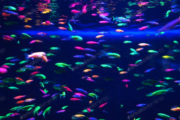 Lots of small neon fish in the aquarium