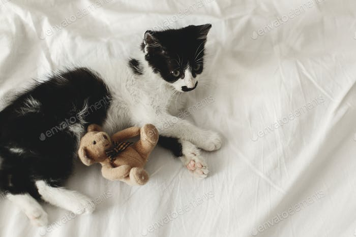 cute little kitty playing with little teddy bear toy