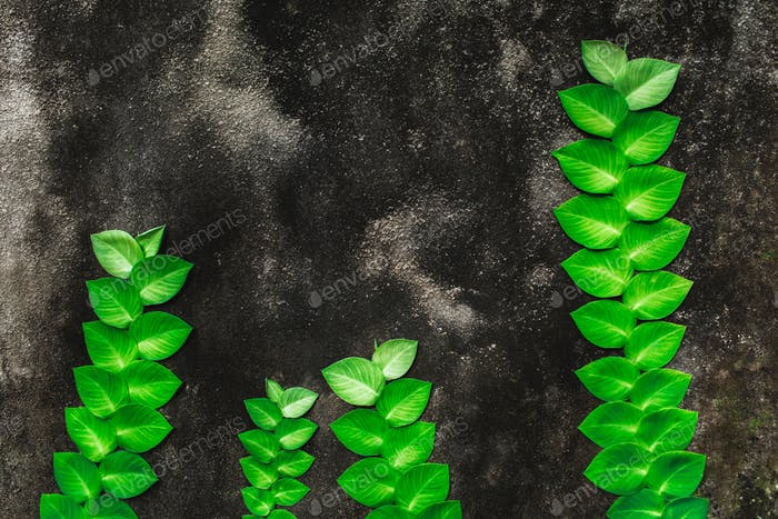 Green tropical plant growing on background of grey and black concrete wall grunge texture