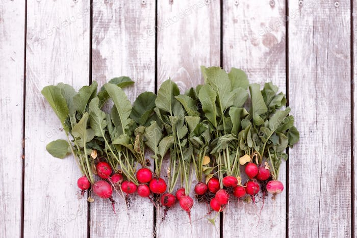 Freshly harvested, purple colorful radish on wooden background. Top view