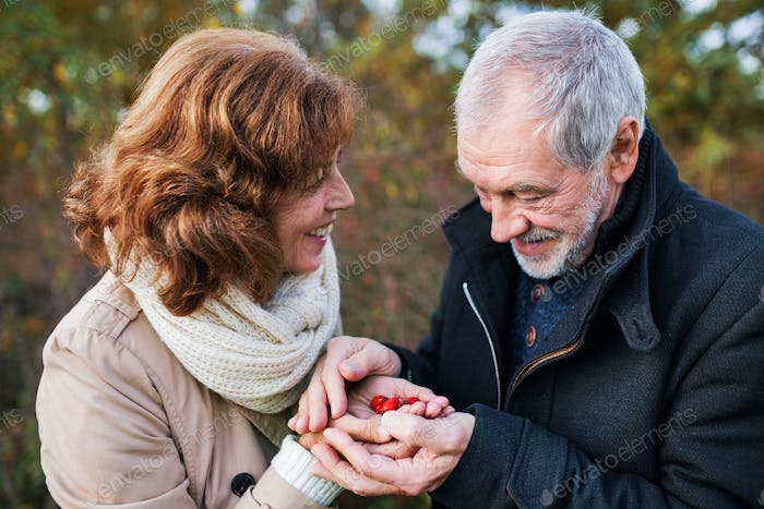 Senior couple on a walk in a forest in an autumn nature, holding ripe rosehip fruits.