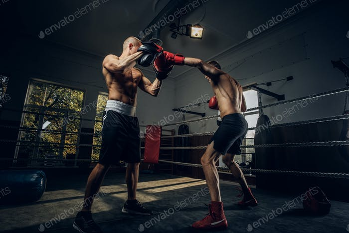 Two sportive men have a boxing competition on the ring