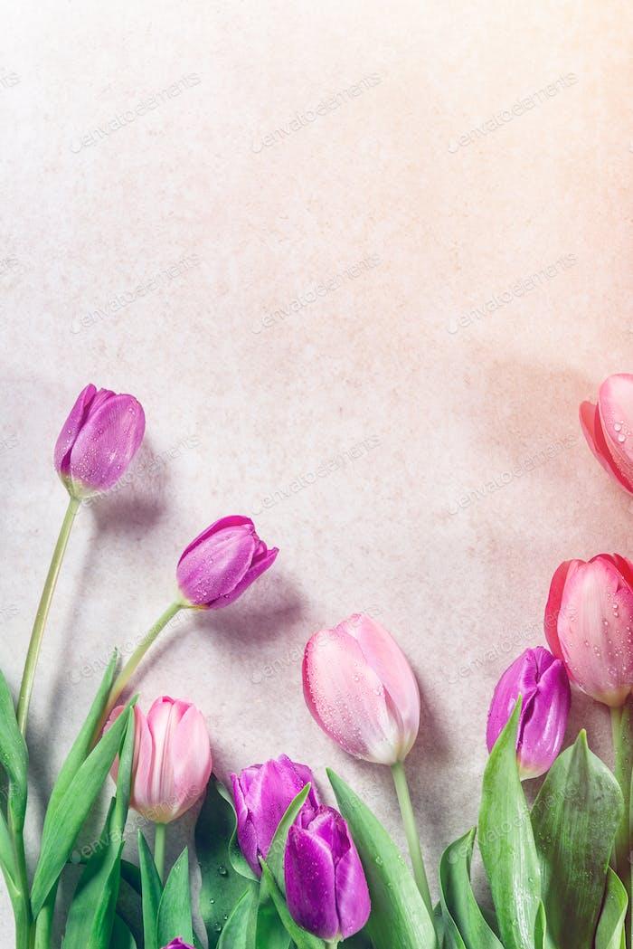 Beautiful purple tulips on grey background