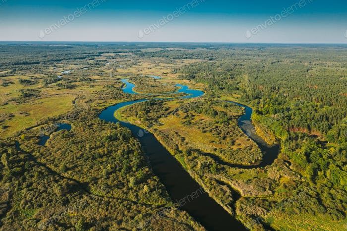 Aerial View Green Forest Woods And River Landscape In Sunny Summer Day. Top View Of Beautiful