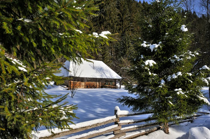 Winter landscape, spruses and cottage covered with snow