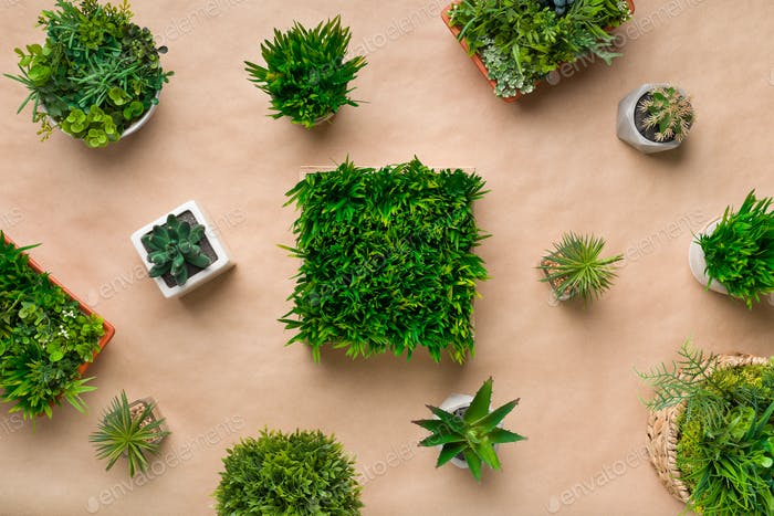 Pattern of various potted plants on craft paper