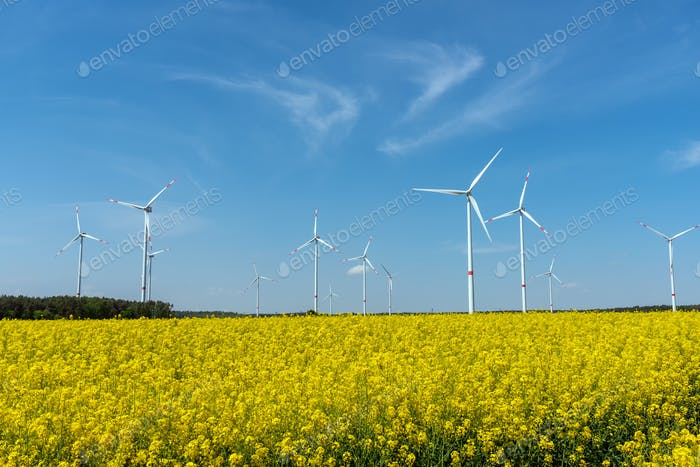 Yellow blooming oilseed rape and some wind energy plants