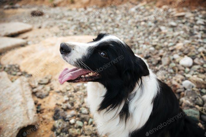 Niedlicher Hund sitzt am Meer