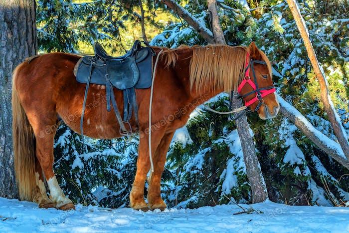 Un caballo equipado con una silla de montar en invierno