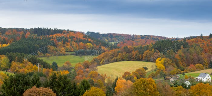 Fall forest Eifel landscape Germany Europe