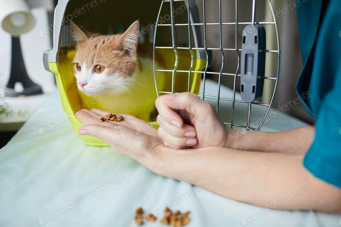 Doctor feeding the animal