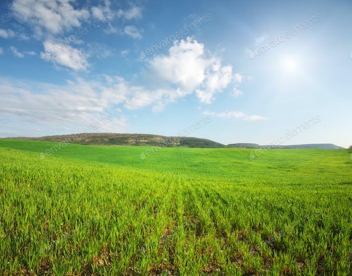 Panorama Weizenwiese.