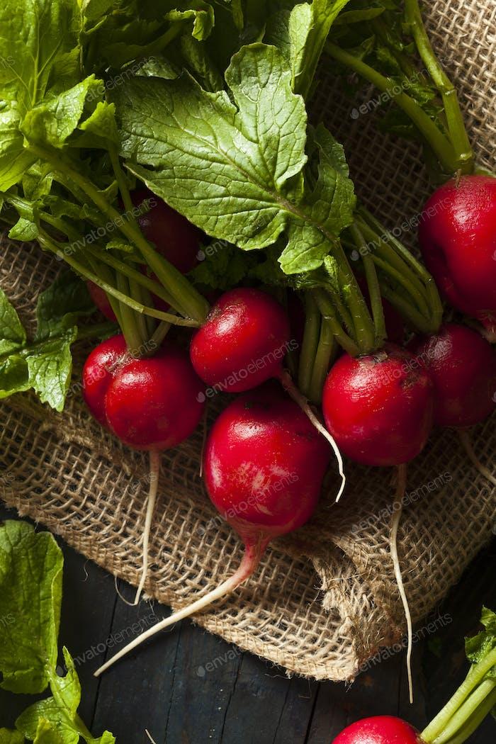 Bio Raw Rote Radieschen