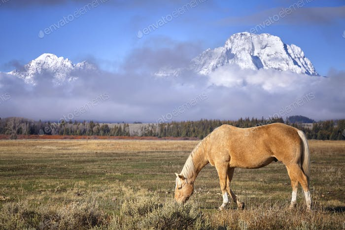 Grazing horse in the Grand Teton National Park, Wyoming, USA