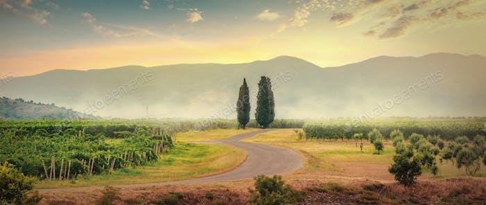 Vineyards in Montenegro
