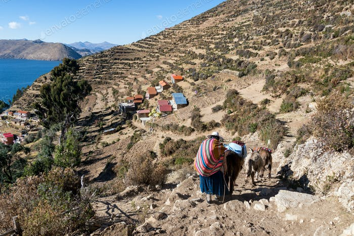 Indigenous Woman and Donkeys
