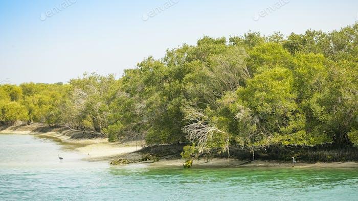 Abu Dhabi Mangroves