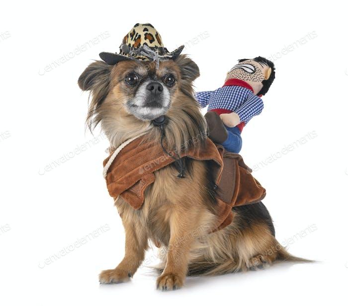 chihuahua and cowboy