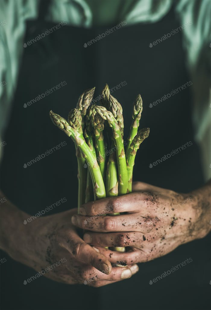 Bunch of fresh uncooked seasonal asparagus in dirty man's hands