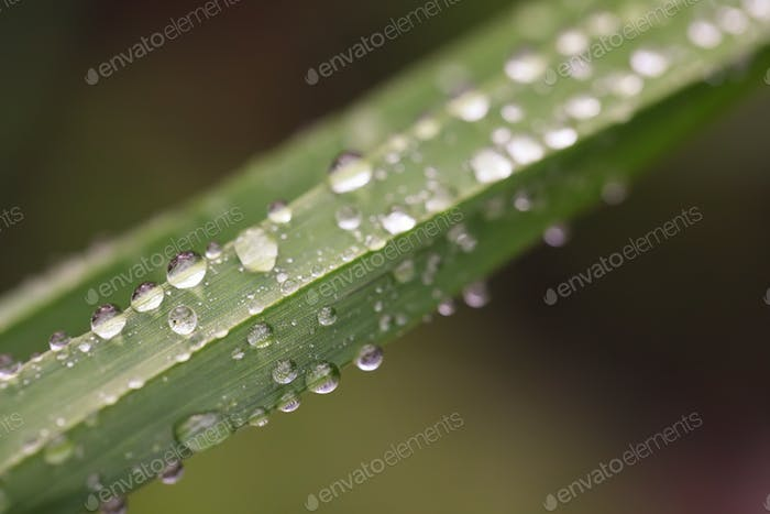 Morning dew on the plant in soft focus
