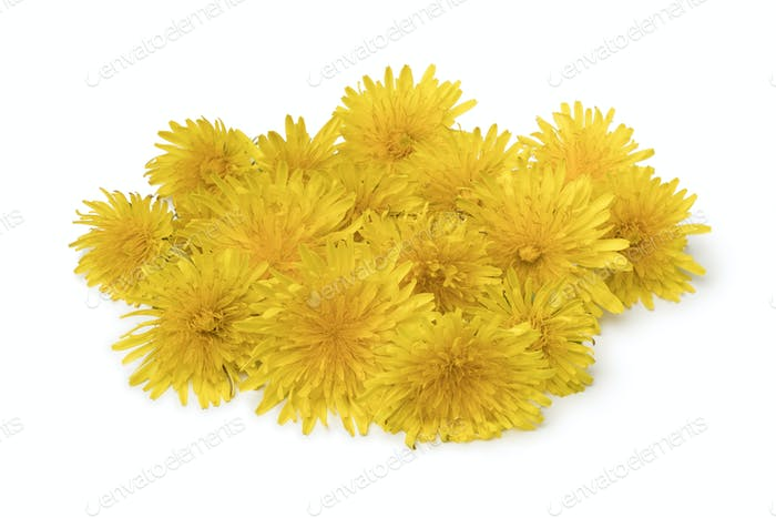 Heap of fresh yellow dandelion flowers