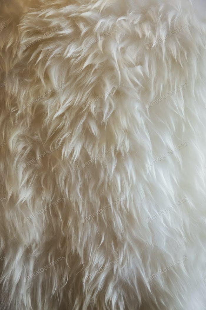 Close up of fine sheepskin or animal wool rug.
