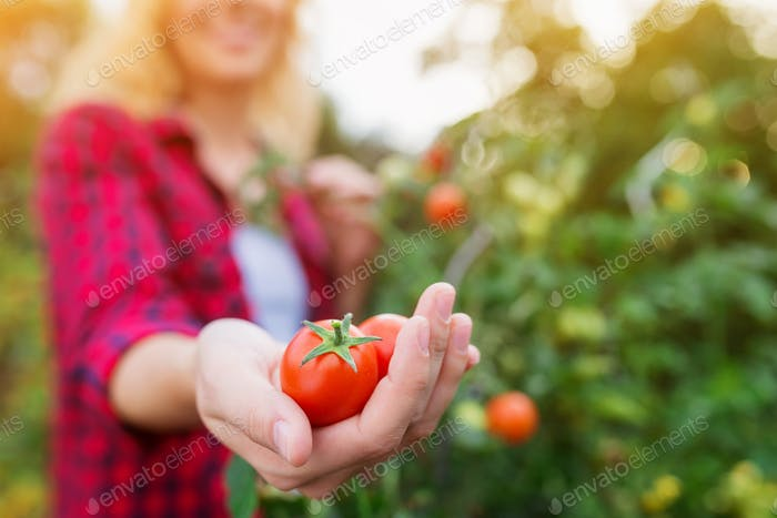Unrecognizable blond woman holding ripe tomato in her hand