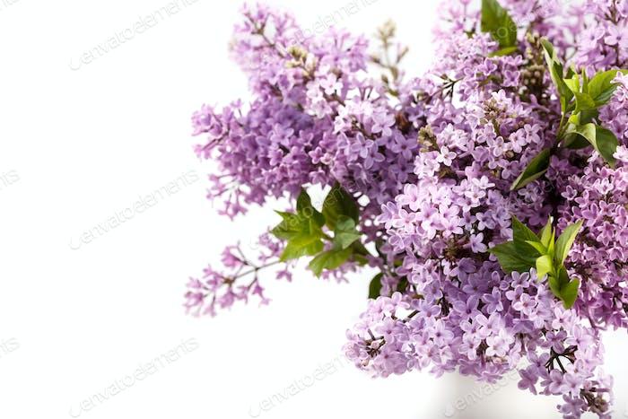 Frühling lila Blumen