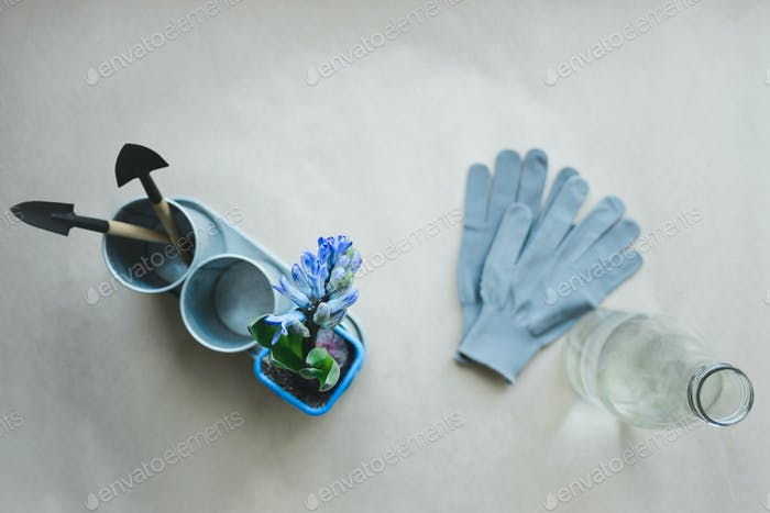 hyacinth, gardening tools, gloves and bottle with water
