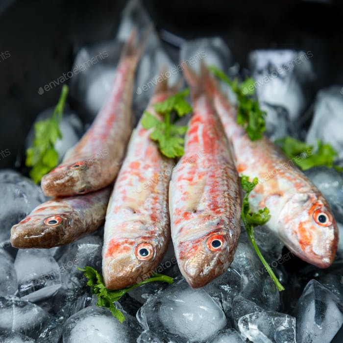 Fresh fish (Mullus barbatus ponticus)