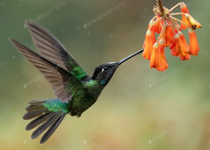 Hummingbird in Costa Rica