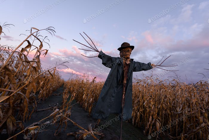 Scary scarecrow in a hat