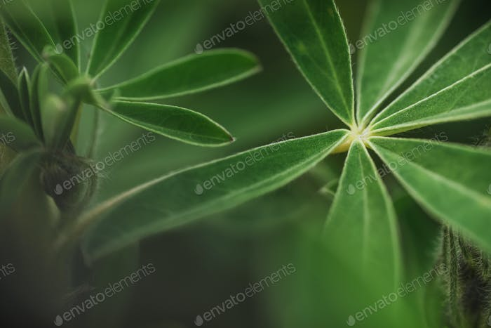 Abstract tropical nature, exotic macro green leaf