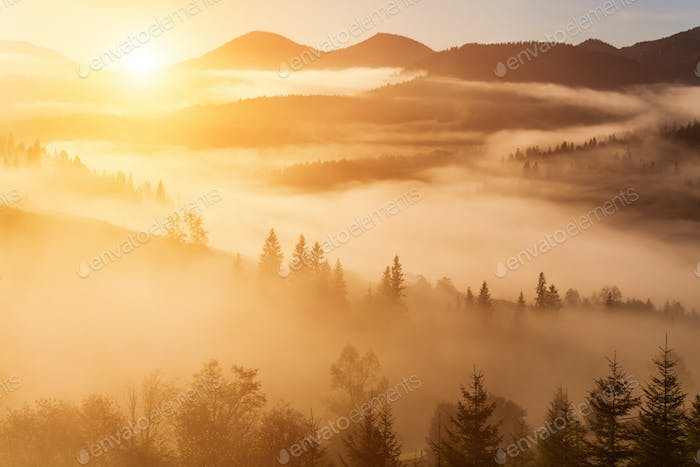 Foggy dawn in the autumn in the mountains