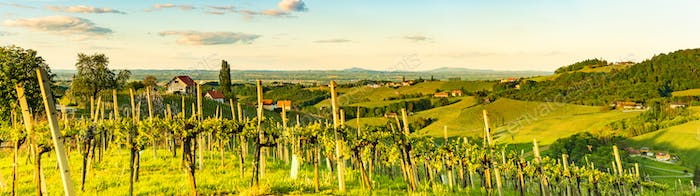 Panorama of vineyards hills in south Styria, Austria. Tuscany like place to visit