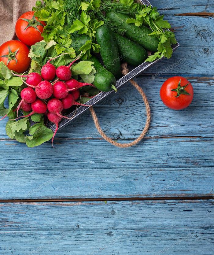 Tomato, radish and cucumbers on  blue background