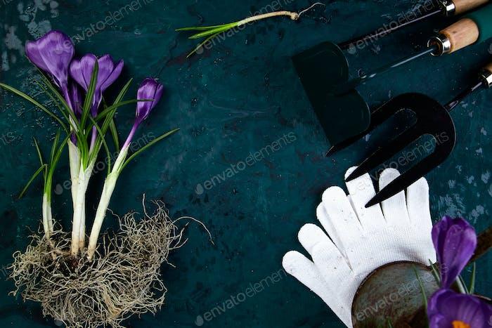 Gartengeräte, Krokusblüte. Frühling