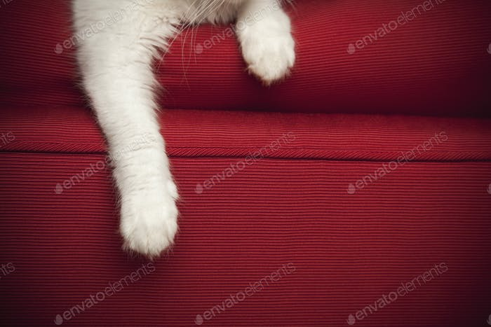 A kitten on a red sofa.  View of the front legs and paw.