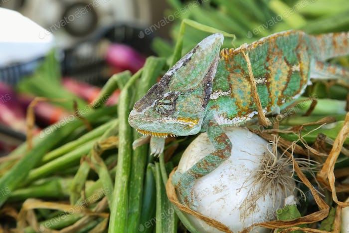 Grün gefärbtes Chamäleon
