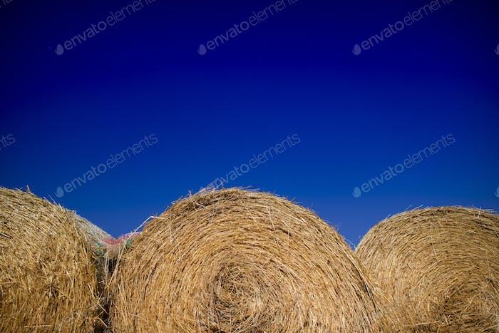 Straw pressed for animals