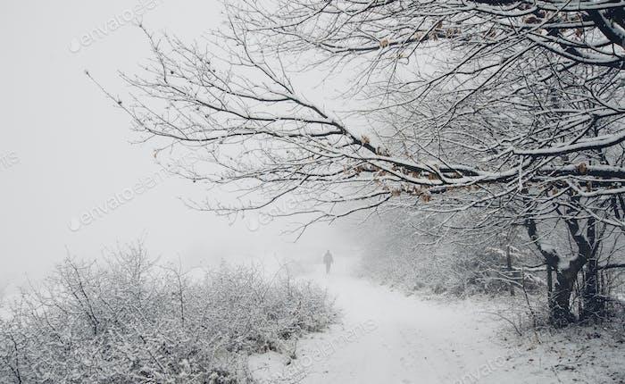 man walking on snowy road in winter nature landscape