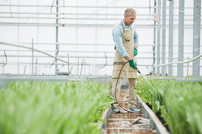 Worker Fertilizing Flowers