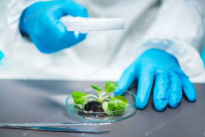Biologist Examining Plant Roots