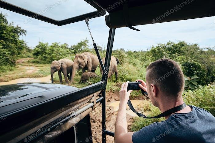 Fotografieren der Gruppe von Elefanten