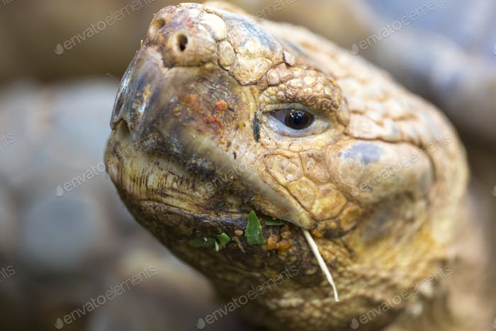Head of Tortoise, Costa Rica
