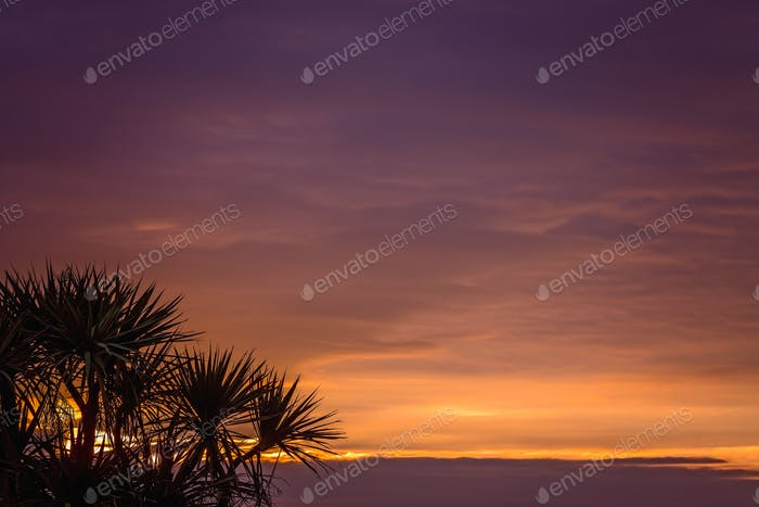 Cabbage tree and sunset sky