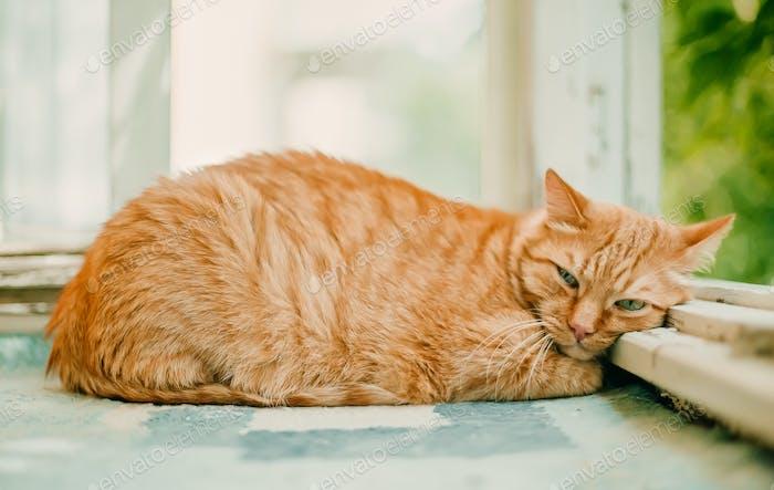 Ingwer Katze schläft an einem sonnigen Tag Zeit auf einem Balkon