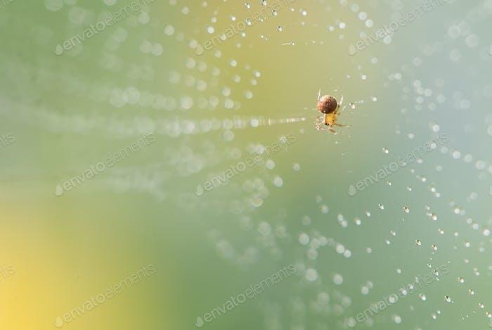 Blendender funkelnder Tau auf Spinnennetzen