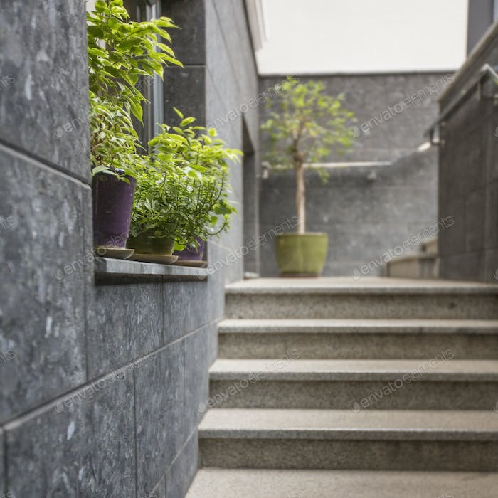 Green plants near cafe or restaurant entrance, concrete stairs